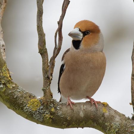 Gesellschaft für Vogelkunde und Vogelschutz Riehen